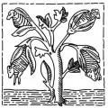 インドの素敵な布 Vol.3 羊の生える木